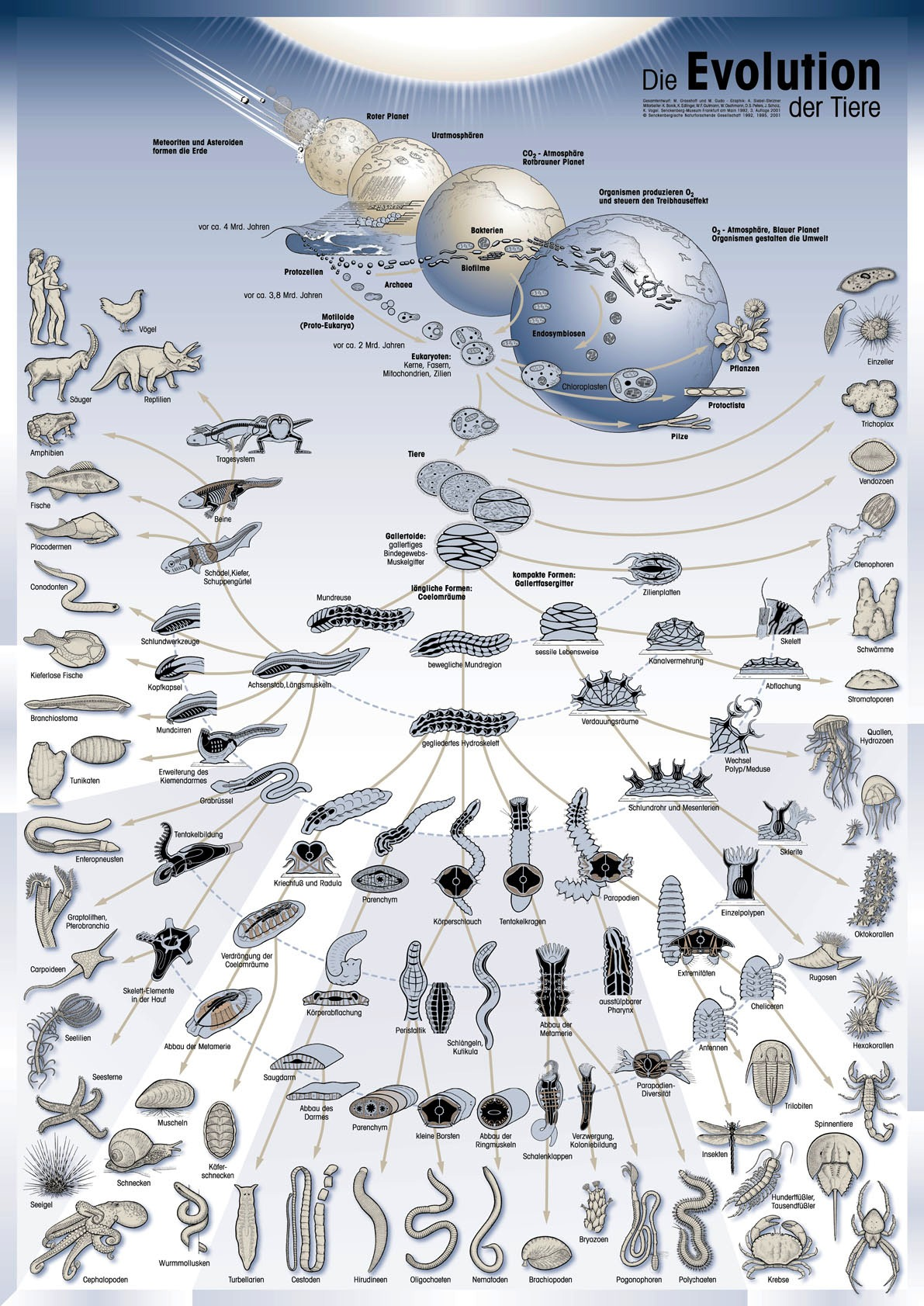 species and macroevolution essay In other words, at the smallest scale, macroevolution is the development of a new  species this definition is more useful because you can.