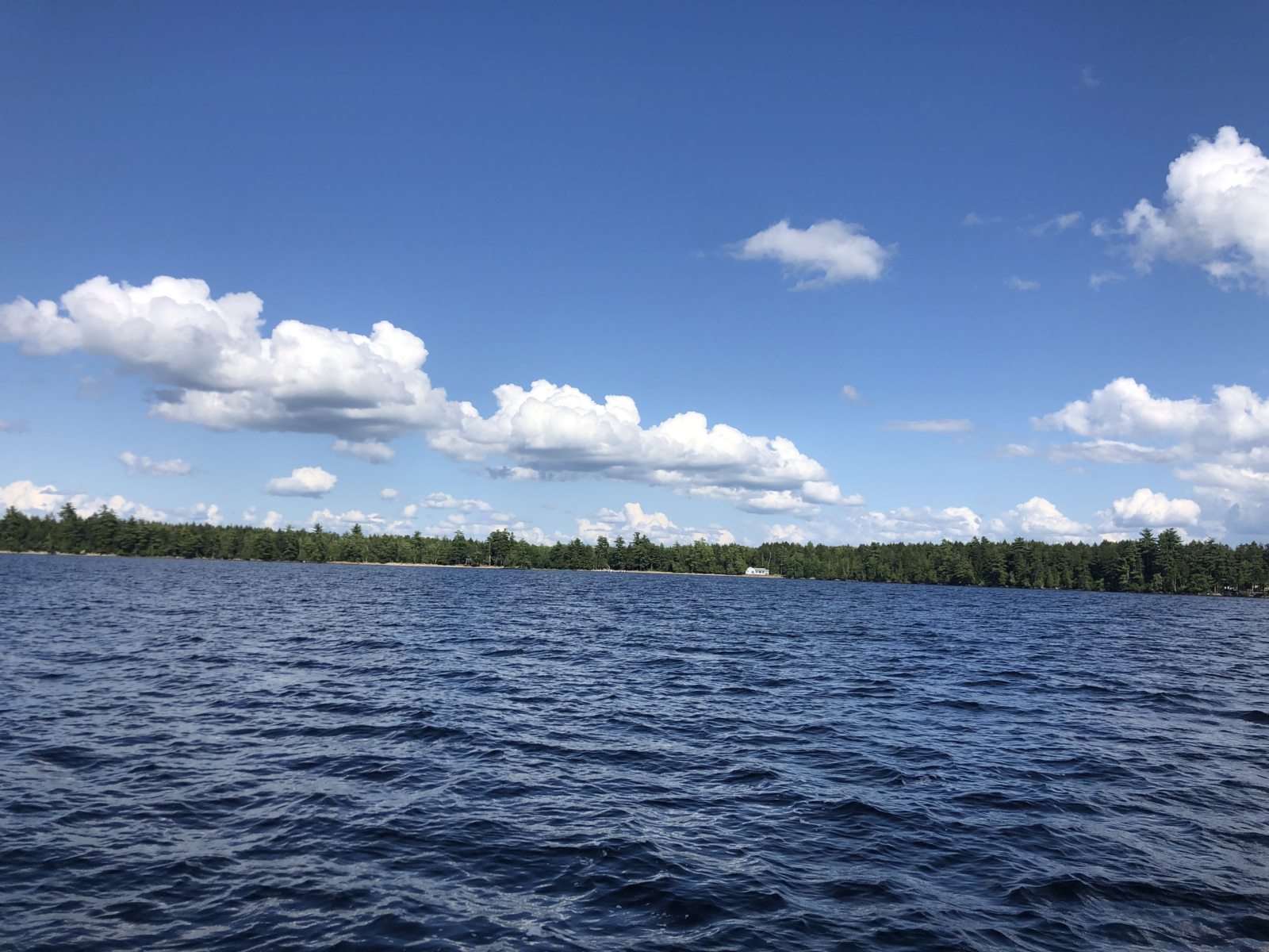 Camp Kotok: Maine Woods, Economists & Wine 2